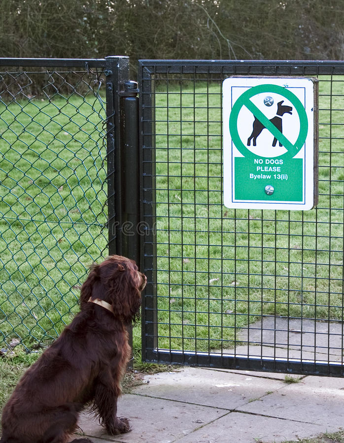 No dogs allowed. Brown cocker spaniel dog waiting at a fence with no dogs allowed sign royalty free stock photo
