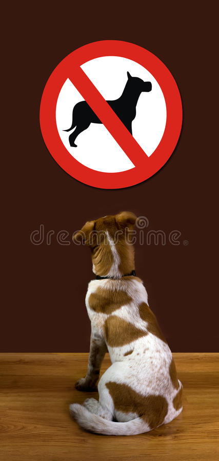No Dogs Allowed. Puppy looking and wondering why no dogs allowed royalty free stock images