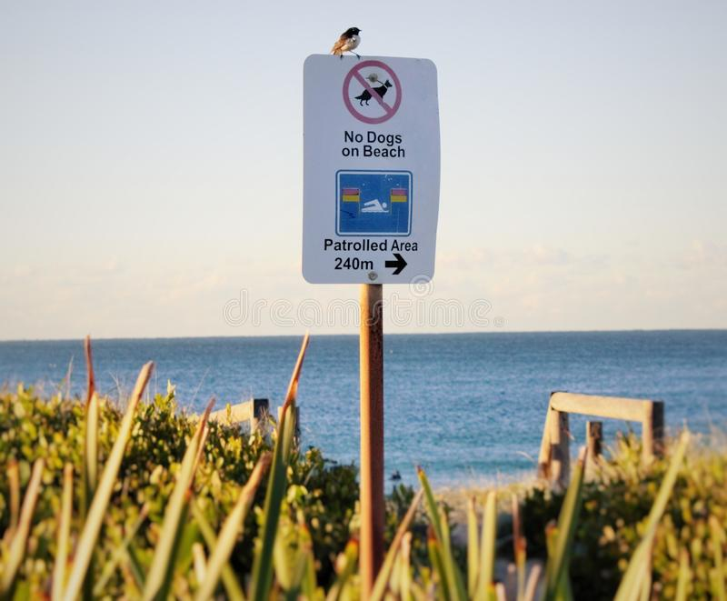 No dogs allowed birds exempt. Ed stock photo