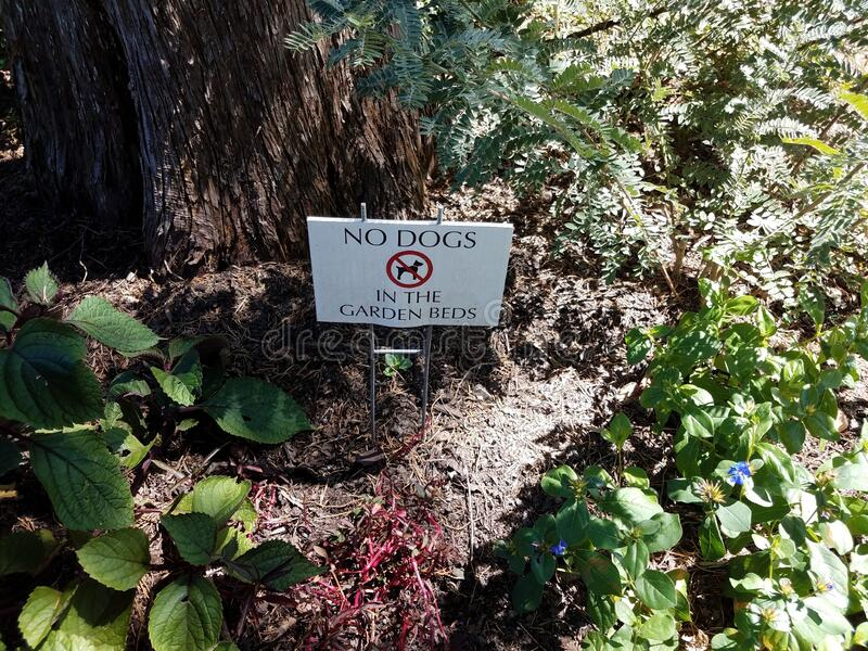No dogs in the garden beds sign with tree and plants. No dogs in the garden beds sign with tree trunk and plants royalty free stock images