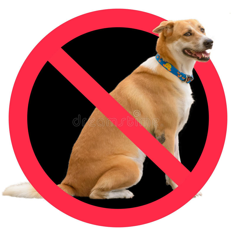 No dogs sign. On a white background royalty free illustration