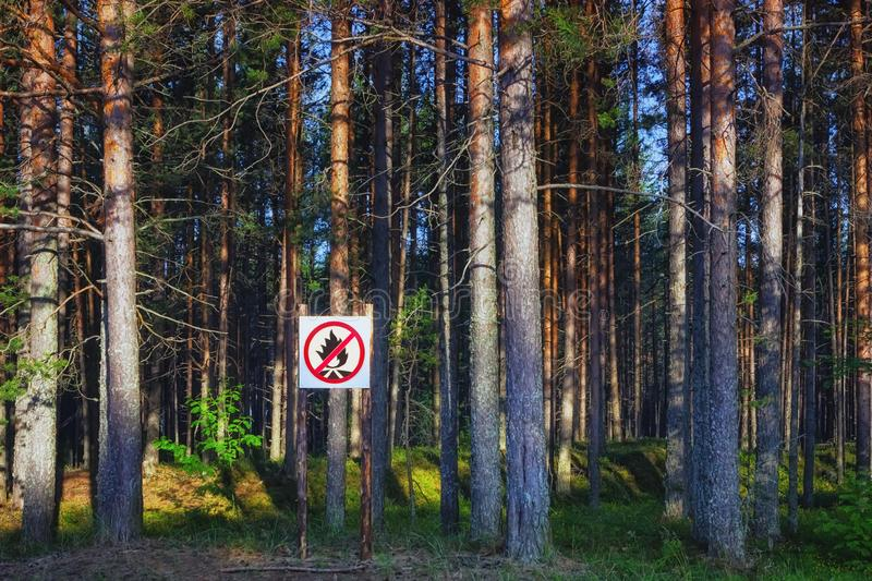 No Fire Sign In A Pine Forest royalty free stock photography