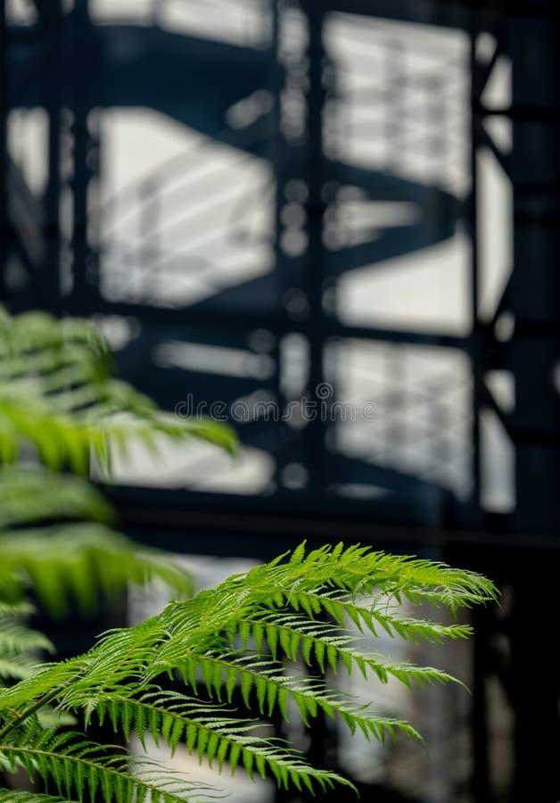 No foco no primeiro plano, samambaias verdes no jardim no jardim de telhado da ponte do canhão No foco macio no fundo, escadas es fotografia de stock royalty free