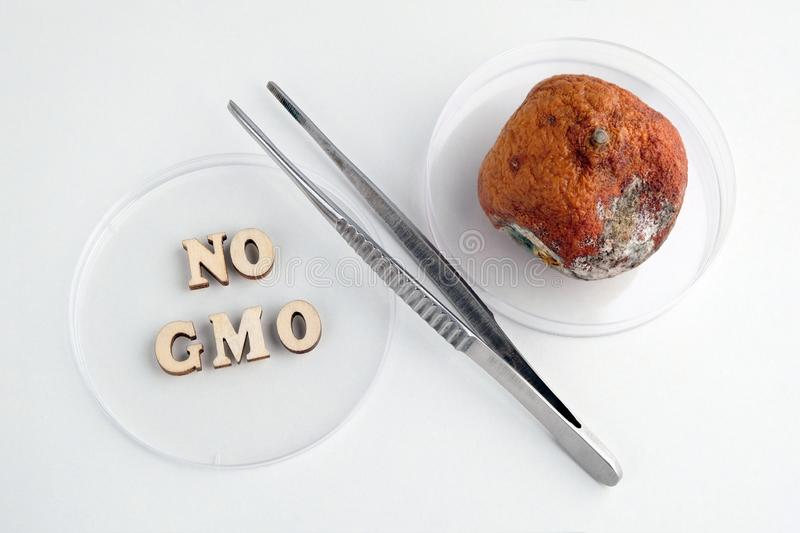 No GMO inscription made of wooden letters. Tweezers and petri dishes. Spoiled tangerine with mold. Symbol of percent. Laboratory royalty free stock images