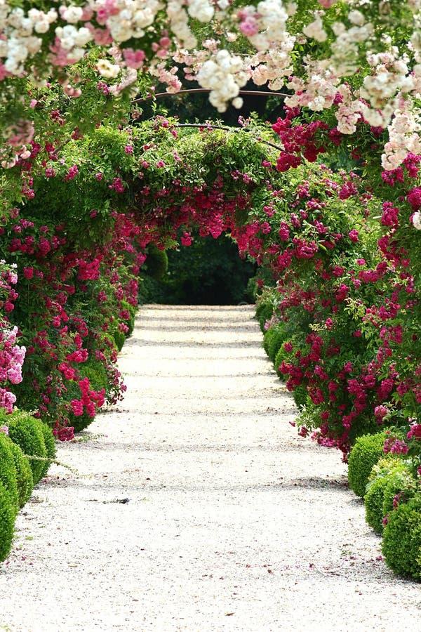 No jardim imagens de stock royalty free