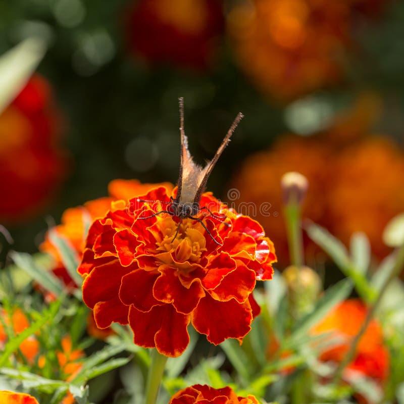 No jardim do verão imagem de stock