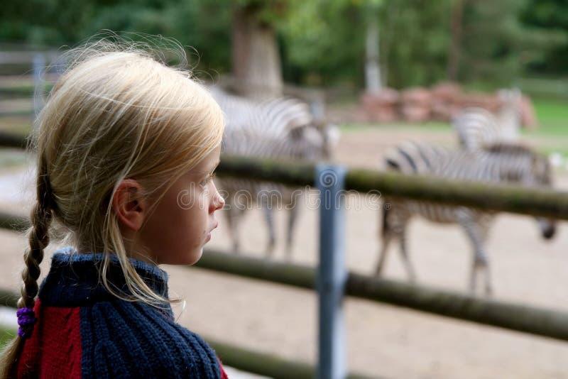 No jardim zoológico foto de stock