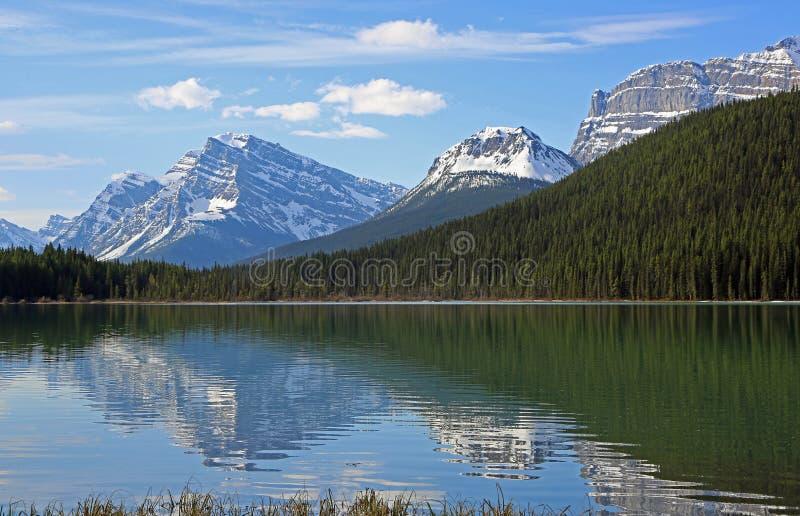 No Lago Waterfowl imagem de stock royalty free