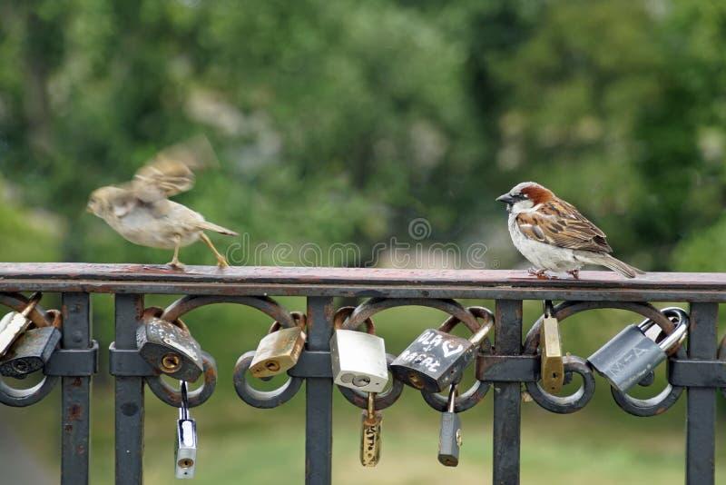 No lleve a cabo un par separaci?n Pájaros en la cerca que cerca con barandilla Candados - un símbolo de un matrimonio fuerte imagenes de archivo