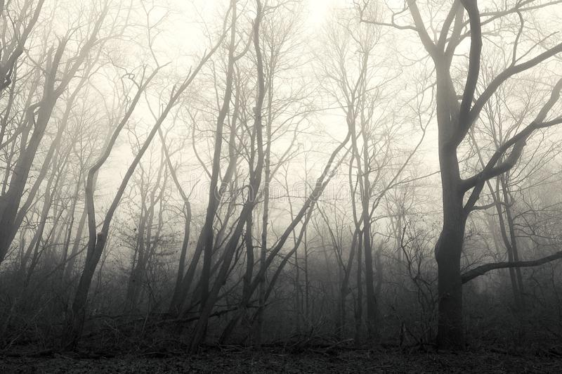 No Mans Land Forest in Fog royalty free stock photo