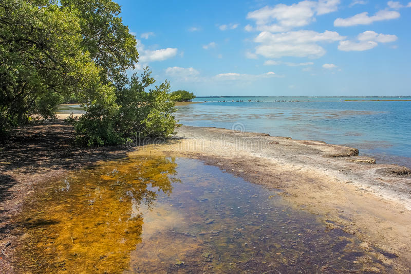 No Name Key. The landscape of the lagoon with mangroves, the little visited No Name Key, an island located in the lower Florida Keys in the United States, close royalty free stock image