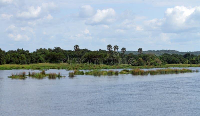 No Nilo do rio em Uganda imagem de stock royalty free