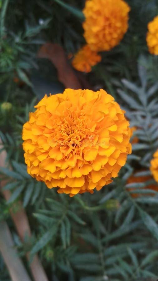 No! no! odkrycia kwiat obrazy royalty free