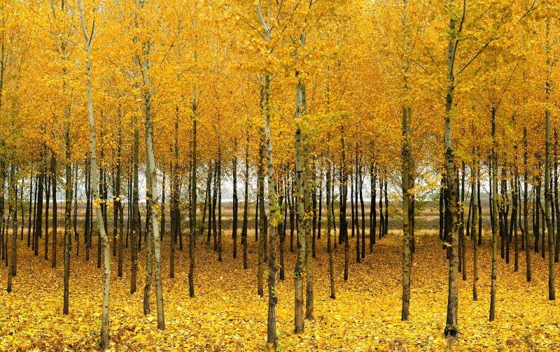 No outono as madeiras imagens de stock royalty free