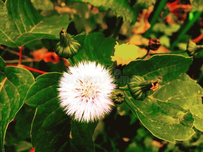 no outono passado flores imagem de stock