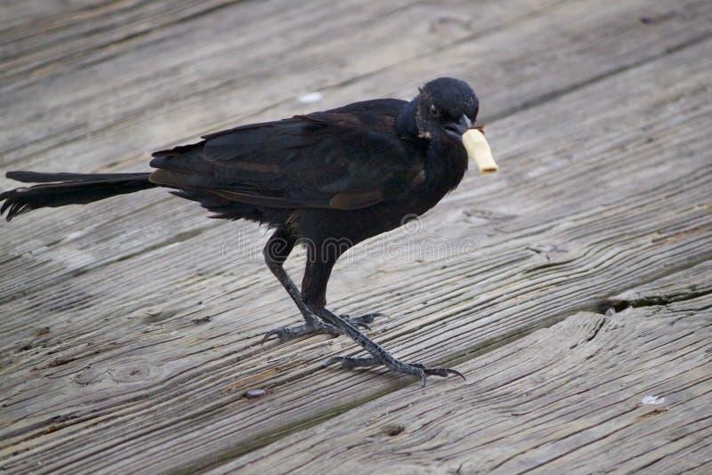 ¡NO, pájaro! imagenes de archivo