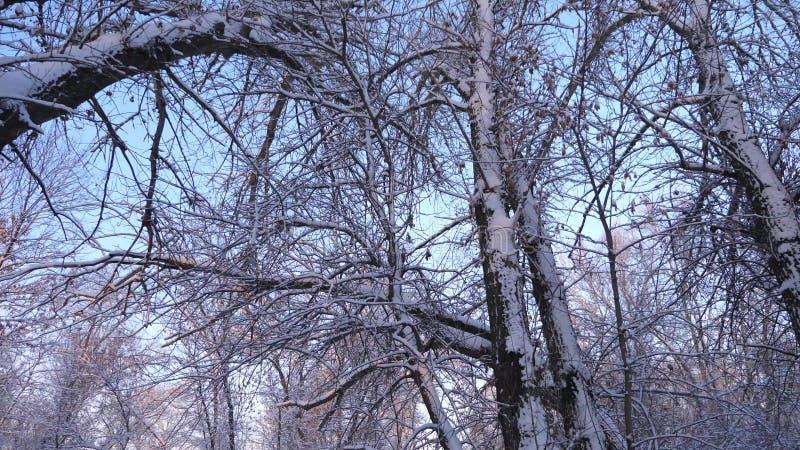 no parque na geada, nas árvores e nos ramos do inverno na neve Floresta bonita do inverno do Natal com neve branca Inverno bonito foto de stock royalty free