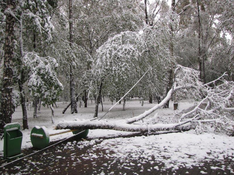 No parque no inverno após blizzard imagem de stock royalty free