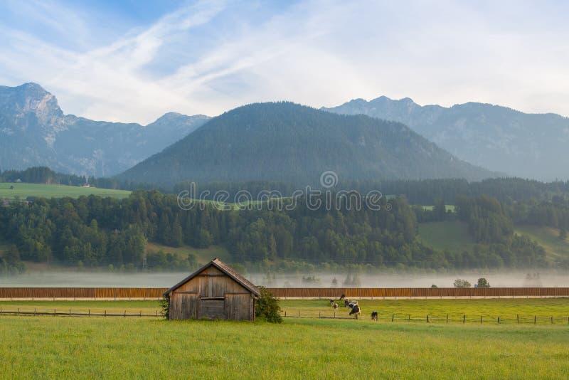 No pasto na névoa da manhã fotos de stock