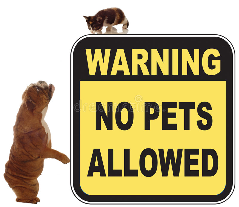 No pets allowed. Dog and cat chase in a no pets allowed sign royalty free stock photography