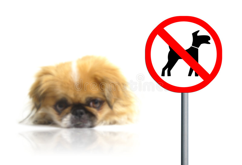 No pets allowed sign. No pets allowed concept. Sad little dog on the background stock images