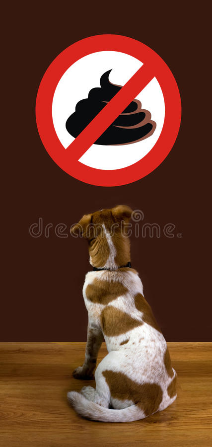 Download No Poop. stock image. Image of toilet, poop, health, waste - 23892505