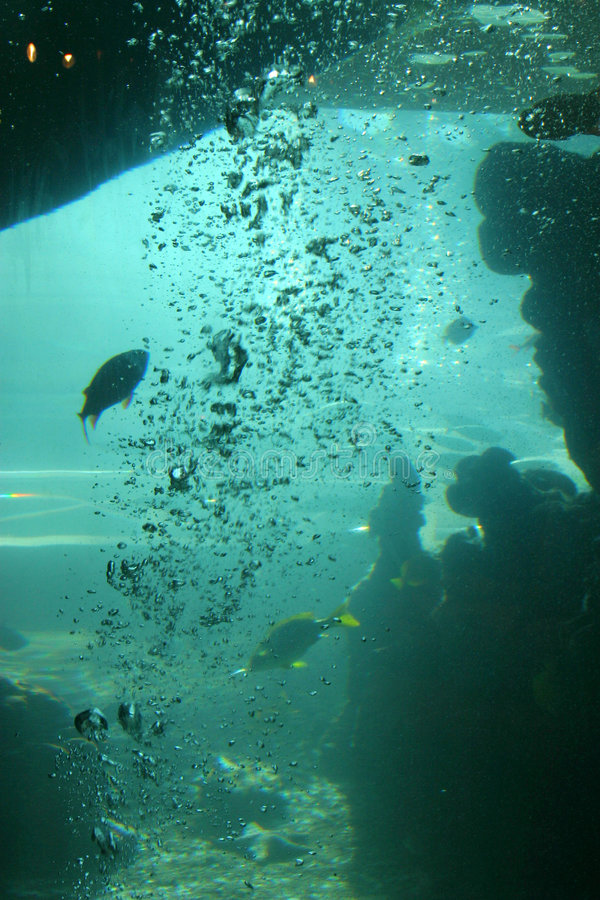 Download No profundo foto de stock. Imagem de peixes, diving, marinho - 538754