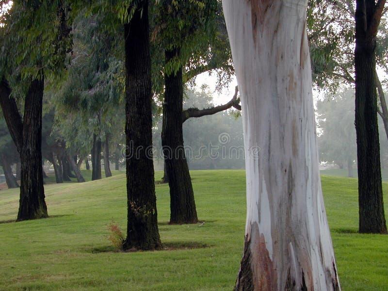 No Puede Ver El Bosque Para El árbol Foto de archivo libre de regalías