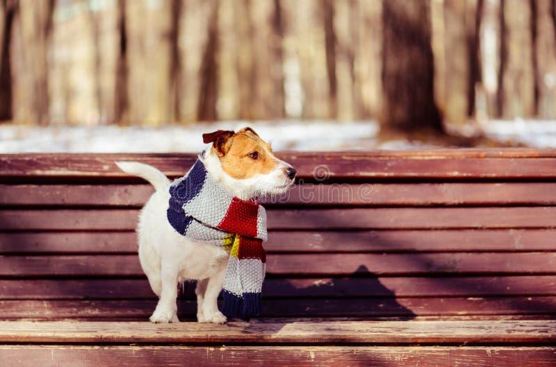 No quente e ensolarado dia de inverno, cachorro usando cachecol tricotado no banco no parque fotografia de stock royalty free
