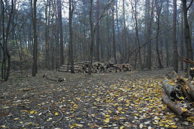 No registro da floresta do outono fotografia de stock