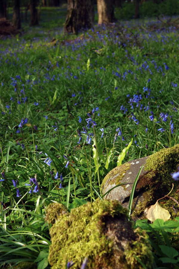 Download No rolling stones stock image. Image of spring, blue, clean - 2855445