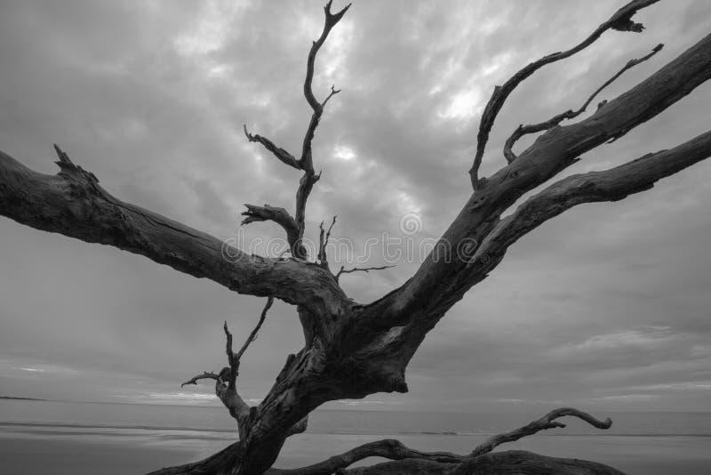 No su árbol de sombra del ` s de la madre imagen de archivo libre de regalías