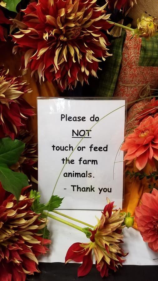 No toque por favor o alimentar los animales del campo firme con las flores rojas de la dalia foto de archivo