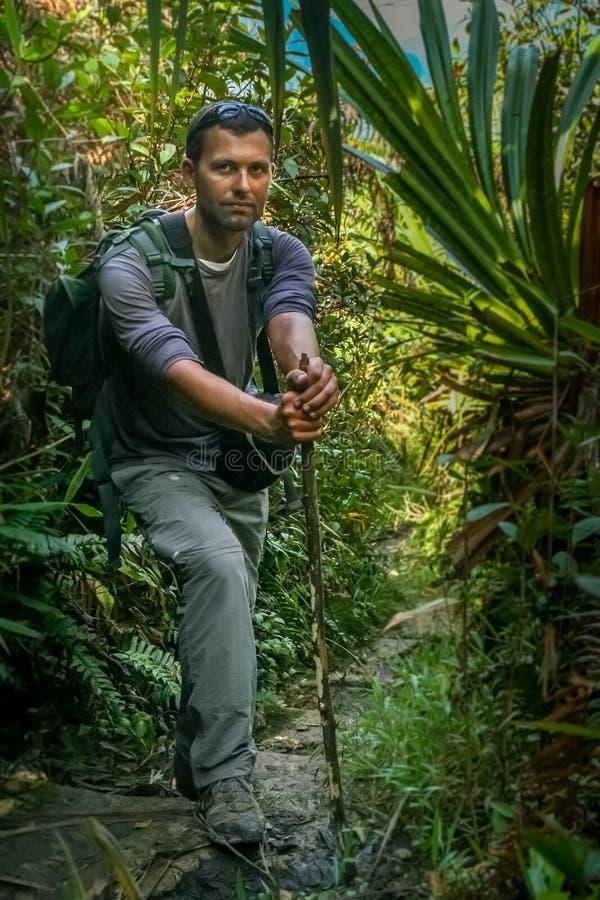 No trajeto da selva fotografia de stock