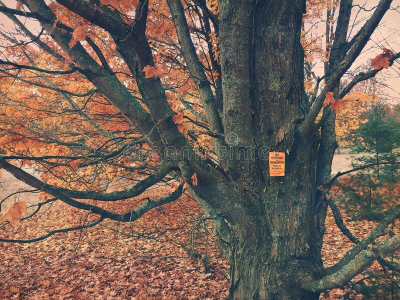 No Trespassing, Private Property Sign on maple tree in the fall. royalty free stock photography