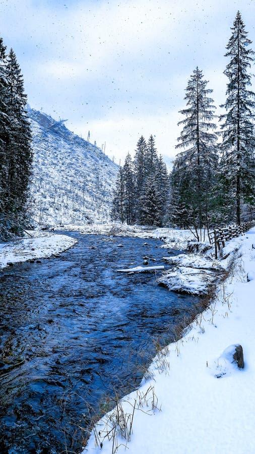 No vale Koscieliska imagens de stock royalty free