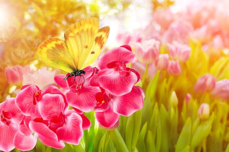No verão no jardim em uma flor cor-de-rosa de uma orquídea senta uma borboleta amarela fotos de stock royalty free