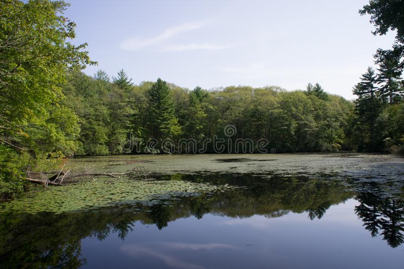 Noanet woods in the summer. Noanet is conservation land run by the Trustees of Reservations. This is one of the ponds on this reservation royalty free stock photography