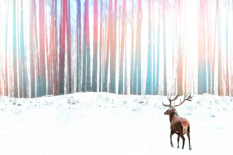 Noble red deer against a winter fantasy colorful forest. Winter Christmas image royalty free stock images