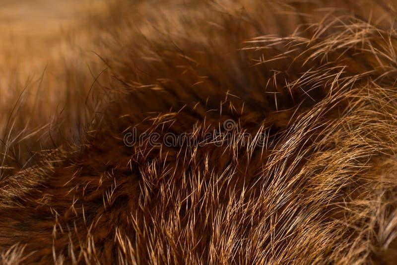 Nobler und luxuriöser Pelz des roten Fuchses, stockfotos