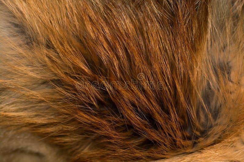 Nobler und luxuriöser Pelz des roten Fuchses lizenzfreie stockfotografie