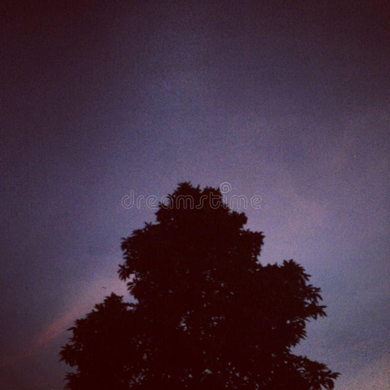 noc zdjęcie stock