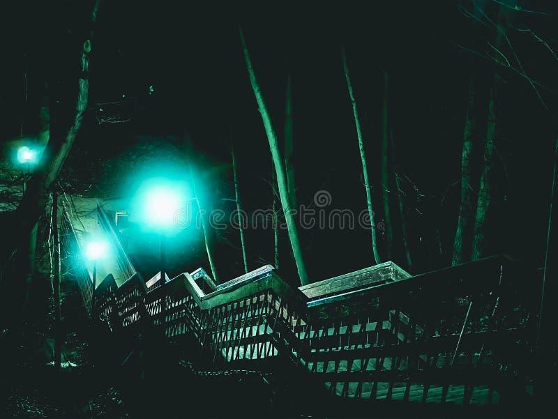 Noc drabinowi schodki w lasowych drzewach obraz stock