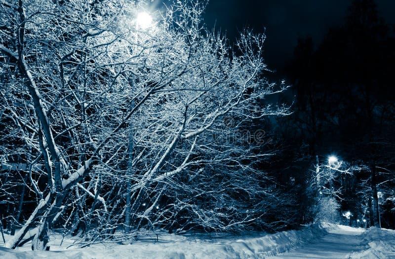 noc drzewa drogowi śnieżni fotografia stock