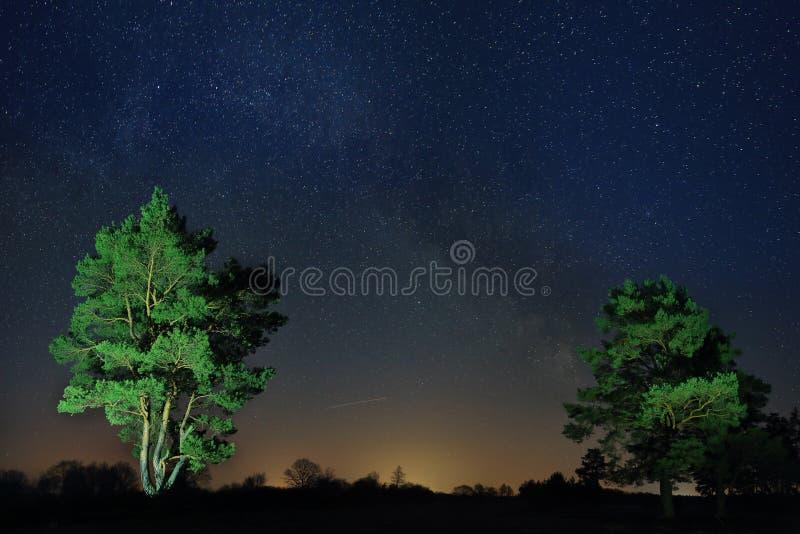 Noc krajobraz osamotneni drzewa przeciw tłu gwiaździsty niebo zdjęcia royalty free