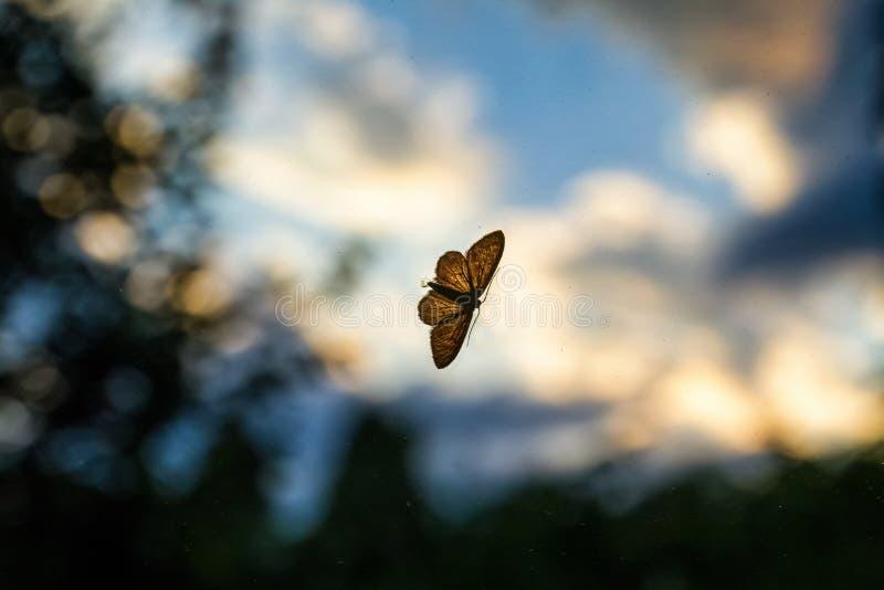 Noc motyl na windowpane zdjęcie stock