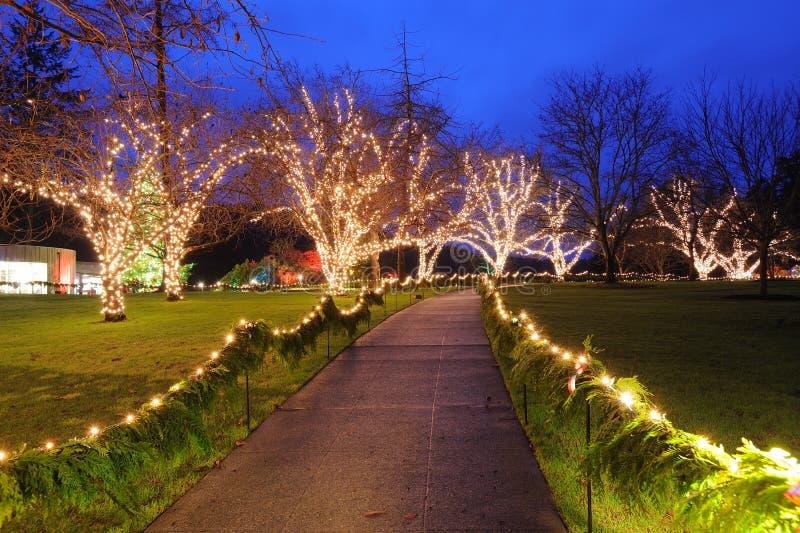 Noc ogród obraz royalty free