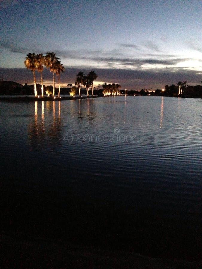 noc palmy obrazy royalty free