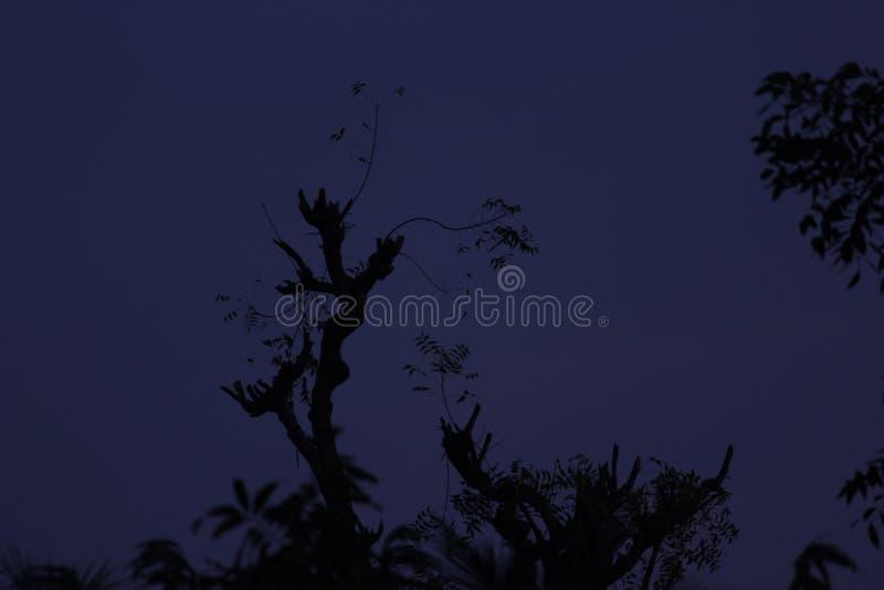 Noc Samotnie fotografia stock