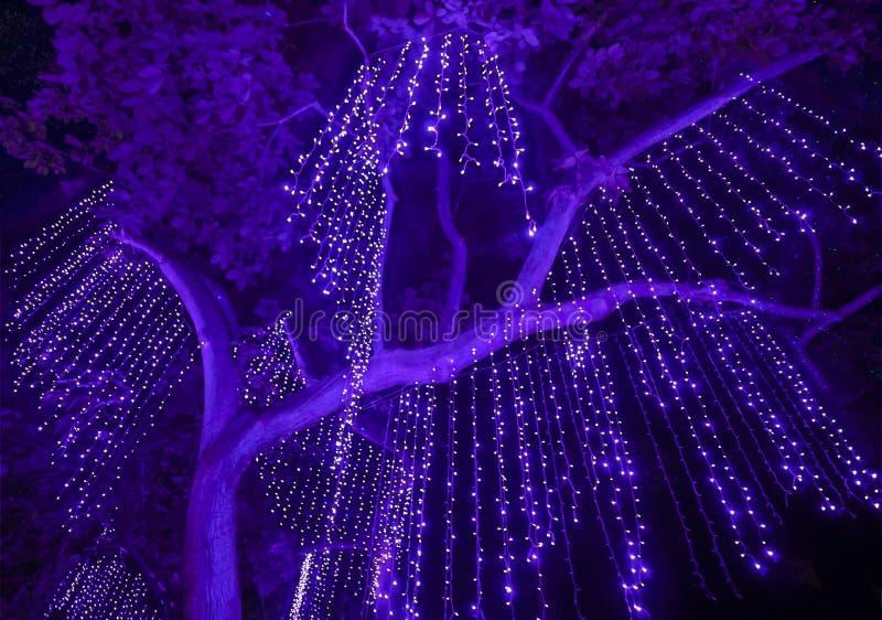 Noc strzał purpury Zaświeca obwieszenie od Wielkiego drzewa zdjęcia stock
